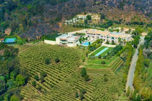Mansion with a vineyard